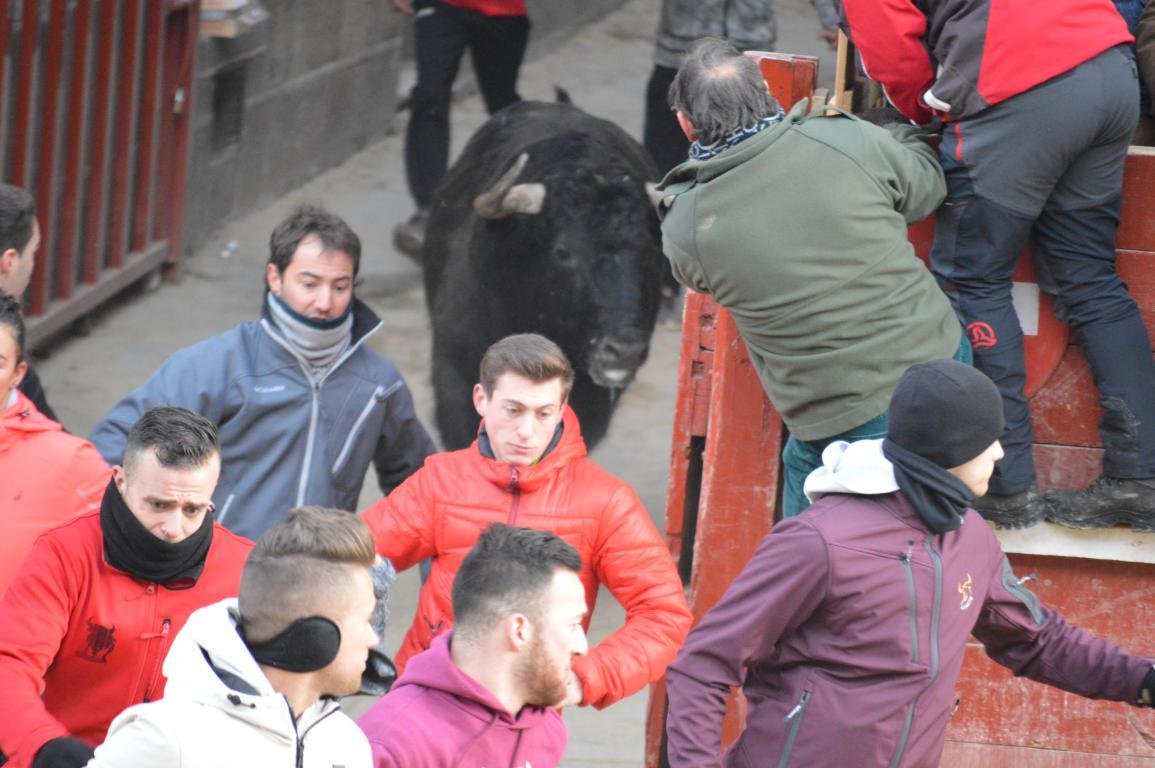 2018 toro del aguardiente (10)