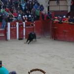 2018 toro del aguardiente (16)