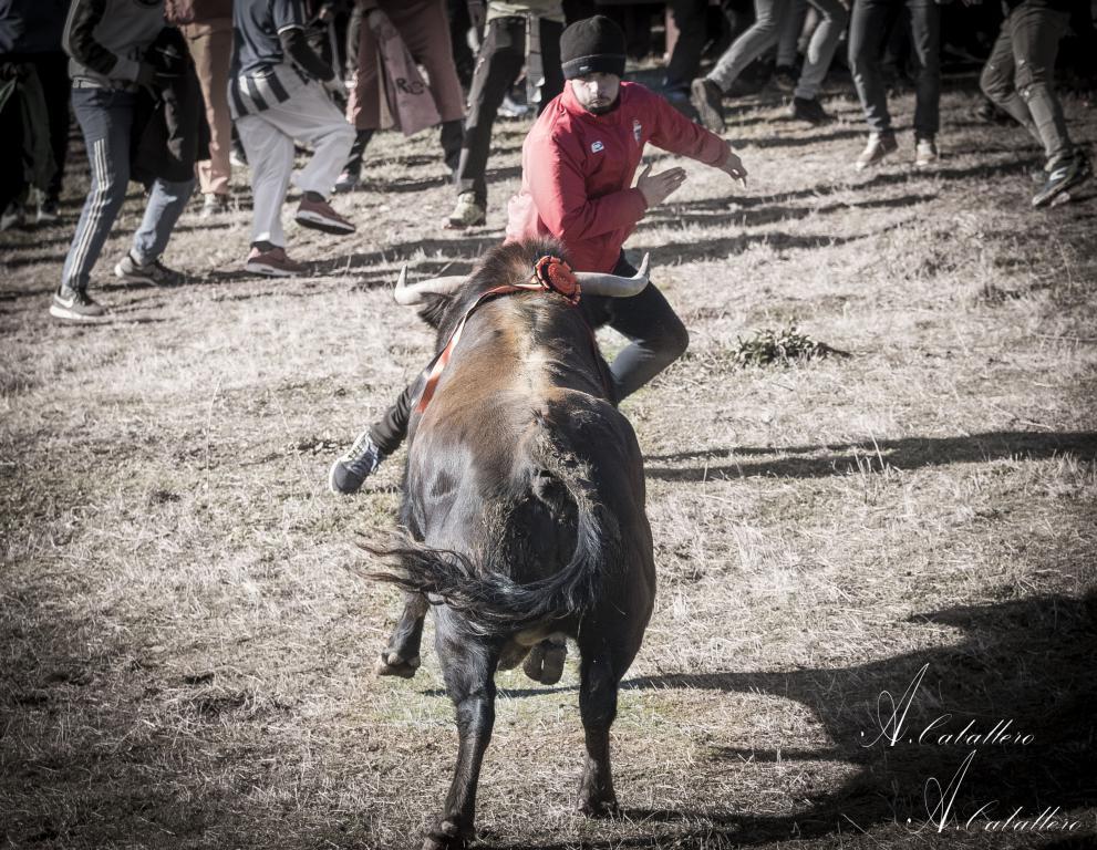 2018 toro del antruejo (14)
