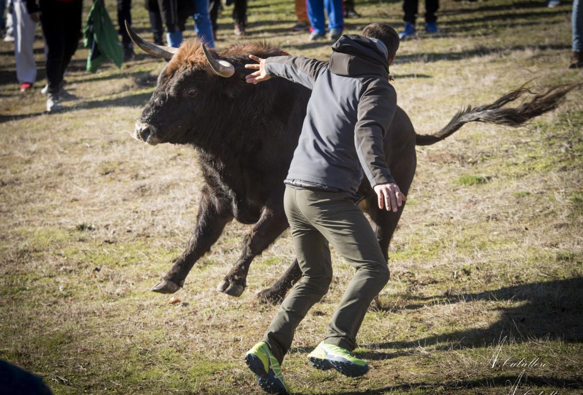 2018 toro del antruejo (9)