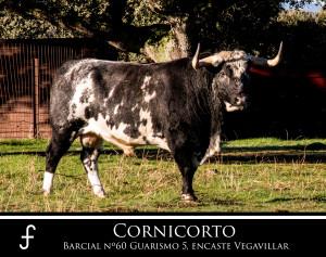 Cornicorto
